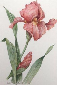 Carolyn_Shores_Wright   Watercolor