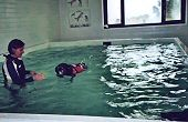 Hydrotherapy for dogs