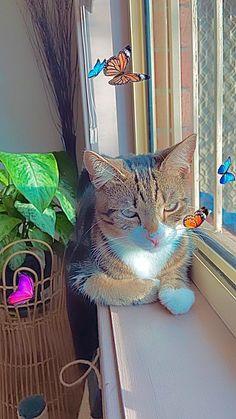Cat Aesthetic, Aesthetic Indie, Aesthetic Collage, Aesthetic Bedroom, Summer Aesthetic, Funny Vid, Cute Little Animals, Indie Kids, My Animal