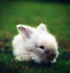 Google Image Result for http://cute-n-tiny.com/wp-content/uploads/2010/10/cute-fluffy-white-baby-rabbit-400x417.jpg