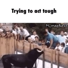 Trying to act tough / iFunny :)