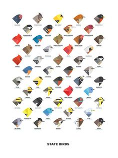 """designersof:  Digital illustration of the 50 state birds, ordered by their state's admittance into the Union. 18"""" x 24"""" Heavy duty 14pt. stock Dull UV coating Open edition, and each one is signed. ————————get your work featured bysubmittingit todesignersof.com"""