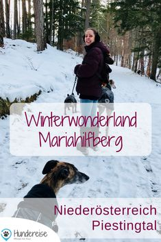 Winter, Dogs, Movies, Movie Posters, Maps, Mountain Climbing, Hiking Trails, Snow, Winter Time