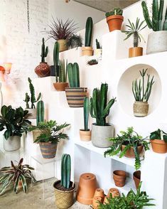 50 DAZZLING YET BEAUTIFUL CACTUS POTS – Page 7 of 50 House decoration; Garden decoration, home improvement, cactus aesthetics Deco Cactus, Cactus Pot, Cactus Planters, Hanging Planters, Hanging Gardens, Decoration Cactus, Decoration Plante, Home Decoration, Cacti And Succulents