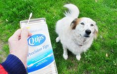 Clean your dogs paws with Q-tips.