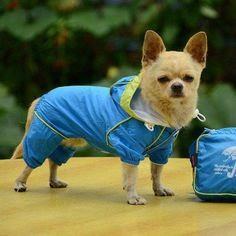 Pet Dog Rain Coat Waterproof Clothes Hoodie Jacket Jumpsuit Apparel Dog Clothes Raincoat For Small Dogs Raincoats girl boy (MEDIUM, BLUE) -- Check out the image by visiting the link. (This is an affiliate link) Pet Puppy, Pet Dogs, Dogs And Puppies, Puppies Tips, Collie Puppies, Blue Raincoat, Dog Raincoat, Hooded Raincoat, Background Grey