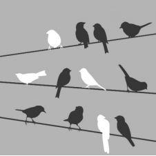 Guardanapo 1824 - Birds on Wire grey - 33x33cm
