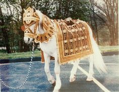 Wedding_Horse