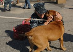 40 best dogs welcoming home soldiers images on pinterest i love g kirsten davis greets her dog tressel in norfolk va after returning home from a two month detachment aboard the amphibious dock landing ship uss m4hsunfo