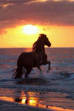 Paarden zijn mijn lievelingsdieren! I love they