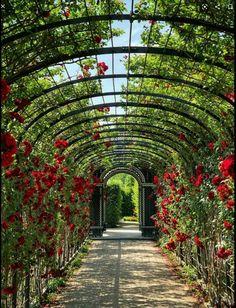 Garden Images, Garden Pictures, Garden Photos, Best Solar Garden Lights, Garden Wallpaper, Jardin Des Tuileries, Photos Hd, Free Photos, Front Yard Landscaping
