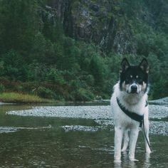 I Quit My Job To Go On Adventures With My Husky Panda Animal - Guy quits his job to go on epic adventures with his husky