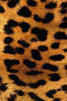 Luipaard printje