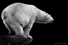 NO FUTURE by Wolf Ademeit. Amazing wildlife photographer and what a sad, but true, title.