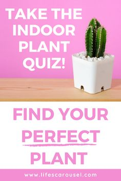 Not sure which type of houseplant to get? Take this houseplant quiz to find your PERFECT match! Answer these easy questions to find the right plant for you! Indoor Plants, Indoor Gardening, Potted Plants, Growing Vegetables Indoors, Types Of Houseplants, Easy Plants To Grow, Hipster Room Decor, Low Light Plants, Mosquito Repelling Plants