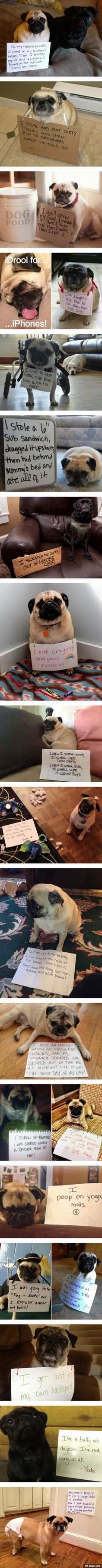 "Pug Shaming... Some of these are hilarious... The ""I only know one position"" thing must be a pug trait."