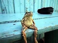 frog is hanging out