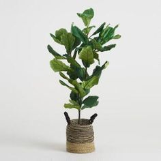 5 Ft Faux Fiddle Leaf Fig Plant - (basket Not Included). by World Market/Cost Plus