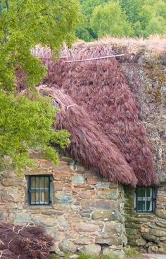 Heather Cottage | Leanach Farmhouse ~ Culloden Moor, Scotland This is Leanach Farmhouse in Scotland. At almost 300 years old its wonderful history is told by the stones, clay and oak that have kept it standing for so many centuries. In this picture the beautiful cottage is getting a new haircut of a red heather thatch.