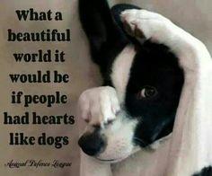 Do u have a heart like a dog?
