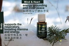 Young Living Balsam Fir 香脂冷杉 https://www.youngliving.com/signup/?isoCountryCode=US&sponsorid=1704613&enrollerid=1704613