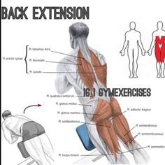 Gym Exercises One of my Favs. Execution Stand on a back extension bench set at around 45º with your feet under the support and your pelvis resting against a cushion. Bend your torso around 90º and then lift it in a straight line before descending again. Arch your back slightly as you lower your torso, as this will ensure that all of the adjacent muscles work when you straighten up again. Breathe in just before the downward movement and out Basic Gym Workout, Gym Workout Chart, Squat Workout, Best Cardio Workout, Toning Workouts, Fitness Exercises, Biceps, Gym Plans, Personal Gym
