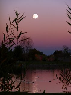 Harvest Moon ducks at EB Rains Park in Northglenn, Colorado. Photo by b k (Joisey Showa Fotos) Beautiful Moon, Beautiful World, Beautiful Places, Beautiful Pictures, Foto Picture, Ciel Nocturne, Shoot The Moon, Moon Moon, Moon Rise