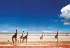 Etosha Pan, Namibia. BelAfrique your personal travel planner - www.BelAfrique.com