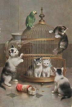 Vintage postcard (by C. Reichert) - 1914 Kittens, parrot and parrot cage. Parrot outside it, 2 kittens inside it! I Love Cats, Crazy Cats, Cute Cats, Funny Cats, Gatos Cats, Photo Chat, Cat Cards, Here Kitty Kitty, Kitty Cats