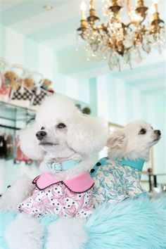Fifi & Romeo
