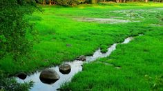 stream grass hd free download wallpapers