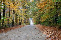 Backs Roads in NH