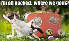 Funny Moving Tips in Photos Moving Humor, Moving Memes, Funny Cats, Funny Animals, Cute Animals, Funny Moving Pictures, Moving And Storage, Animal Quotes, Cat Quotes