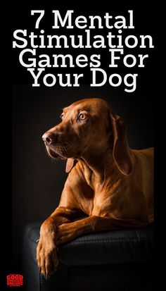 Keep your dog mentally sharp with brain training for dogs, including 7 mental stimulation games for dogs that will help keep them busy. Brain Training, Dog Training Tips, Training Classes, Obedience Training For Dogs, Training Online, Agility Training, Free Training, Training Equipment, Big Dogs