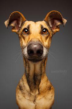 Delightfully expressive portraits of dogs... Photographer Elke Vogelsang