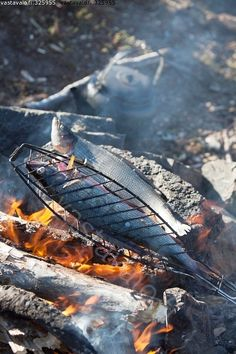 Harjukset paistumassa nuotiolla Vastavalo.fi Finland Destinations, Campfire Breakfast, Finland Travel, Outdoor Life, Trekking, Bbq, Camping, Nature, Helsinki