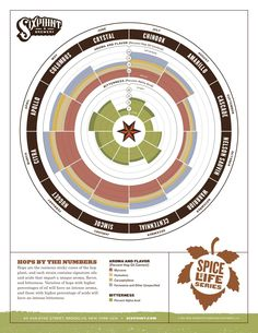 Six Point brewery hops infographic
