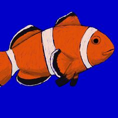 My very first attempt at #digitalpainting with this #clownfish and it took longer than I thought, but I'm pretty pleased. #artoftheday #art #artistic #drawingaday #sketching #sketchoftheday #sketchaday
