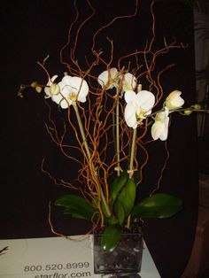 Triple stemmed white phalaenopsis orchid plant decorated with curly willow and polished black river rocks.   To view our entire selection please visit us at www.starflor.com  #flowers #events #eventdecor