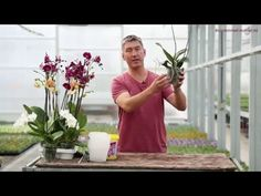 Orchideenpflege - New Ideas Vegetable Garden Tips, Garden Tools, Herb Garden, Lidl, Evergreen Flowering Shrubs, Orchids Garden, Ranunculus Flowers, Flower Garden Design, Orchid Care