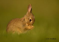 outdoormagic:  Praying Rabbit by Dalia Kvedaraite