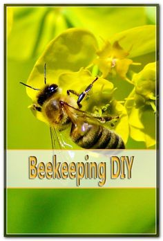 The springtime is the time when honeybees reproduce. The natural means of reproduction for honey bees is called swarming. The springtime swarming period typically last about three weeks. Bee Pictures, Honey Bees, Spring, Diy, Animals, Bees, Animales, Bricolage, Animaux