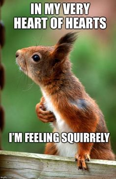 From the heart. Funny Animal Memes, Cute Funny Animals, Animal Quotes, Cute Baby Animals, Animals And Pets, All Animals Pictures, Funny Animal Pictures, Squirrel Girl, Cute Squirrel