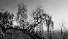 Milano, il reportage in bianco e nero è un omaggio all'Albero della vita