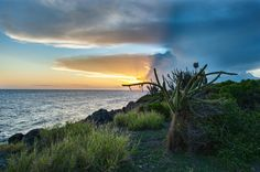 Cactus by the Sea Shore. Guantánamo Bay, Cuba.