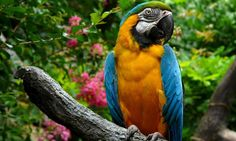 Macaw Desktop Wallpapers WPPSource 1920×1080 Macaw Wallpapers (34 Wallpapers) | Adorable Wallpapers
