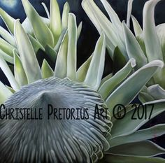 Artist: Christelle Pretorius. Beautiful composition of South African Proteas. Oil on Canvas. Subjected to copyright. For more information contact Christelle christelledv@live.com Oil On Canvas, Composition, My Arts, African, Live, Artist, Plants, Beautiful, Painted Canvas
