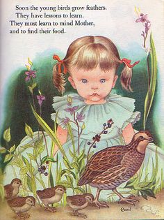 "Birds, Illustrations by Eloise Wilkin, 1958- Quail    ""Birds"", Little Golden Book, 1958by Jane Werner WatsonIllustrations by Eloise WilkinQuail"