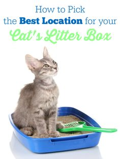 How to Pick the Best Location for Your Cat's Litter Box -  important factors you need to consider!