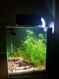 Akwarystyka Tradycyjna – Niskobudżetowa akwarystyka środowiskowa Aquarium, Fish Stand, Aquarius, Fish Tank, Fishbowl